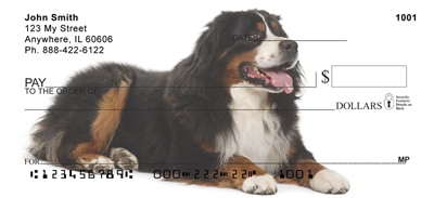 Bernese Mountain Dog Check 1