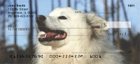 American Eskimo Dog Check Thumbnail