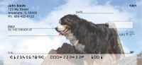 Bernese Mountain Dog Check Thumbnail