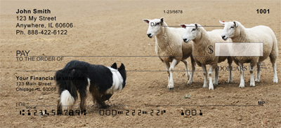 Border Collie Check 1