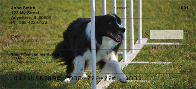 Border Collie Check 0