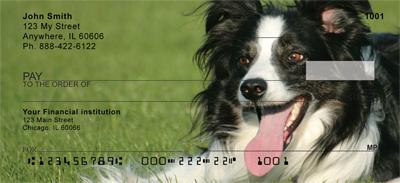 Border Collie Check 2