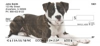 American Staffordshire Terrier Check Thumbnail