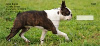 Boston Terrier Check Thumbnail